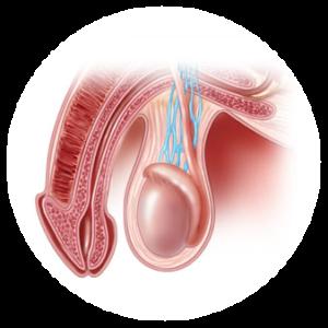 statii-mujki-problemi-urology