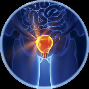 statii-pikochen-mehur-urology