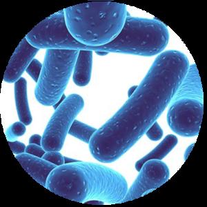 statii-uroinfekcii-urology