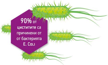 cistit e.coli